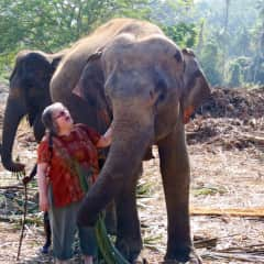 At a Sri Lankan elephant sanctuary.