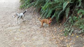Pablo and Tillie on the trail