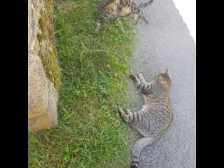 La Creuse village cats.