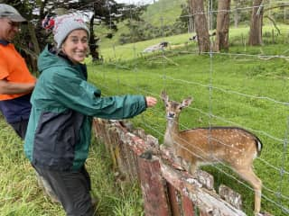 Deers are everywhere in NZ.  This one is from a hungarian breed.  West Coast, North Island, NZ 2021