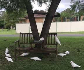 Wild birds I feed in my Garden
