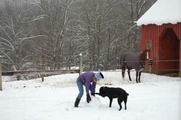Rose playing w black Lab in snow