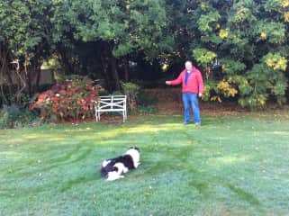 Judy playing with Border Collie