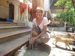 Pagoda cats organization in Siem Reap