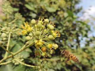 Bee in Crete, 2015. I'm a keen amateur photographer, particularly nature & scenery.