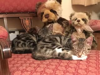Bertie and Millie