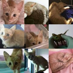 Ginger the kitten. I found Ginger sick, scared and weak on the side of my school in China and took him in and nurtured him back to health. I found Ginger a lovely forever home in my circle of friends and he is now a very big boy that I still miss.