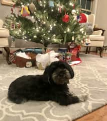 Lola our friend's dog at our home in December 2018. They stayed with us for 1 week.