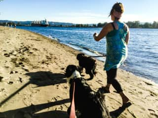 Taking dogs for a walk on the Columbia River