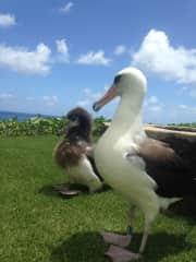 My work buddies on Kauai