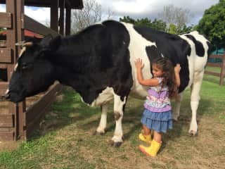 My girl with Mariposa our Cow