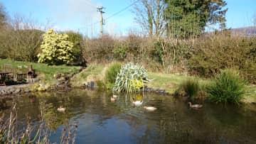 The ducks on their mini lake