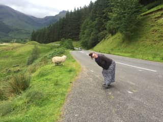 Me trying to say hello to some sheep in Scotland