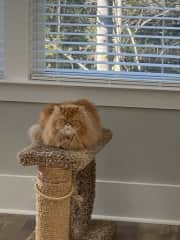 Chesney has a scratch post by the back window and he loves it