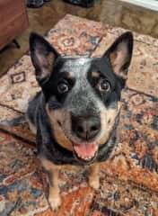 My dog of 10 years - Nanook. :)