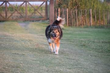 Enjoying longs walks with our Tyson.