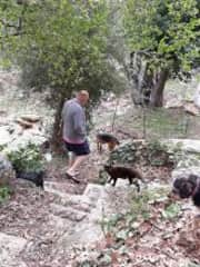 Gordon with part of the menagerie of animals (15) on Andros, Greek Islands 2019