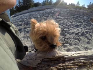 Archie in Campbell River