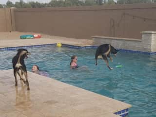 Playing with two German Shepherds in the pool at a recent house sit.
