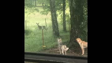 Buster and Baxter with deer
