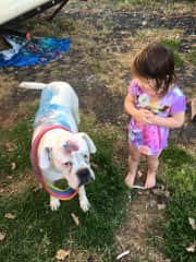 Our granddaughter Zoey thought she'd pretty up her boxer Dezmond