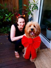 Munro - A christmas surprise! My friends adorable golden groodle.