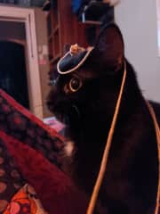 Cat with string