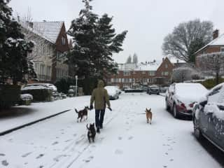 Me and my three dogs, in a morning walk, this last winter.