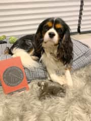 Rafa is very proud of his obedience award - best small dog 2019