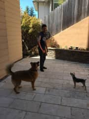Dominic playing with Leo and Bruce during our last pet sitting.