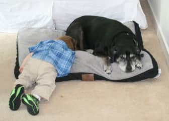 Hugs kisses and naps with your pet!