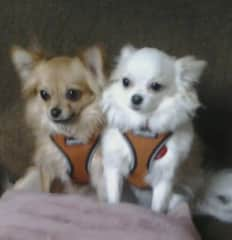 Inca and Maya will capture your heart.  Inca is a little timid but Maya will love you the minute she sees you.