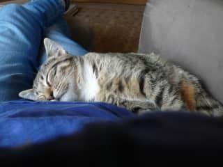 Molly (Cuddles)