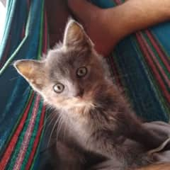 """Reading books in the hammock with """"Gray"""" during a homestay. (Thailand)"""