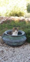 Cat in pot.