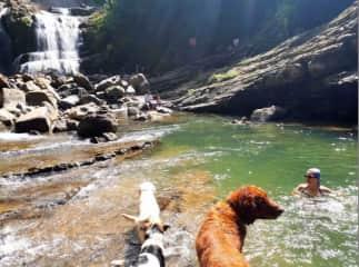 Swim with Bill's dog, Chewbaka, DSK and White. Costa Rica