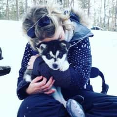 Puppy love - Lapland