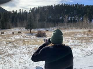 Dad photographing the elk in Estes Park