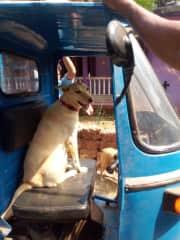 Shanu want to drive the Rickshaw