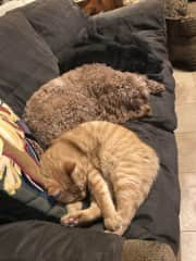Yep, pets rule the house sometimes, eh? :) This photo reflects my experience in taking care of a variety of pets of different sizes, ages, & health needs.