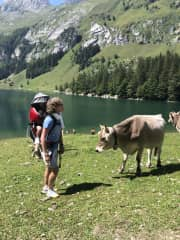 Our home country, Switzerland, where we like to hike and say hello to the cows