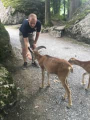 Paddy feeding the goats