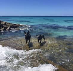 Endo and Willow enjoying a day at the beach, Dunsborough Western Australia
