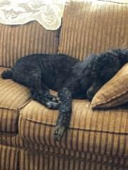 Violet on sofa