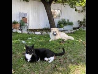 Hanging out in the backyard