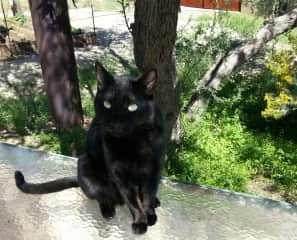 Love this kittykat called Coal♡