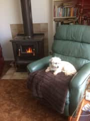 This is Miss Molly, a gorgeous Shitzhu girl, who is a regular guest. She appropriated my chair on her very first visit!