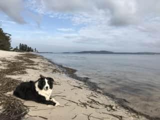 Zena enjoying the dog friendly beach
