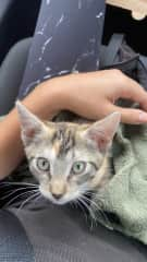 rescued kitten on the way to the veterinary