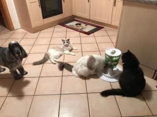 Rexi, Julius, Nessie, and Figaro